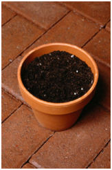 Plant bulbs in a flower pot