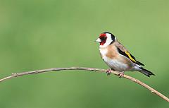 perched bird 2