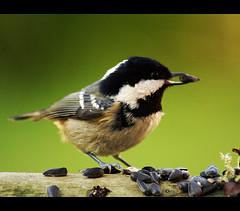 perched bird 7